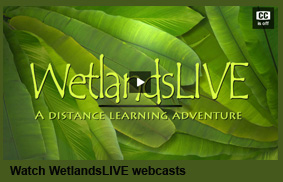 WetlandsLIVE webcasts